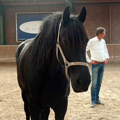 Communicatietraining met paarden